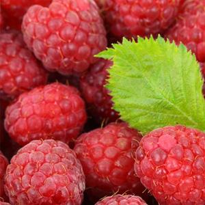 Framboesa - Frutas Vermelhas - Antioxidante Natural