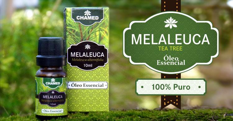 Óleo Essencial de Melaleuca alternifolia (tea tree australiana) - Produção própria 100% puro